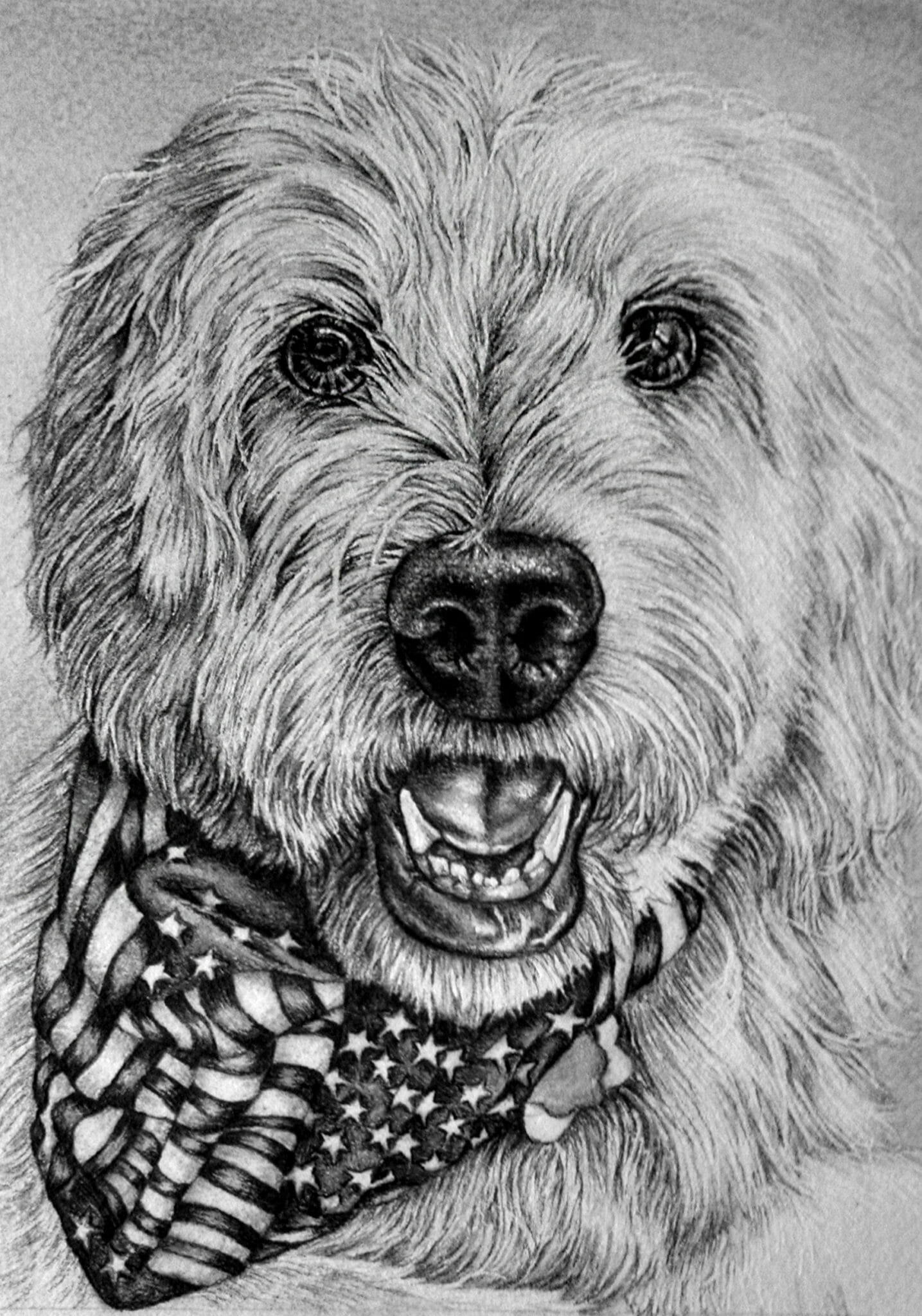 Pet Portrait Goldendoodle Pencil Drawing Artistry By Lisa Marie