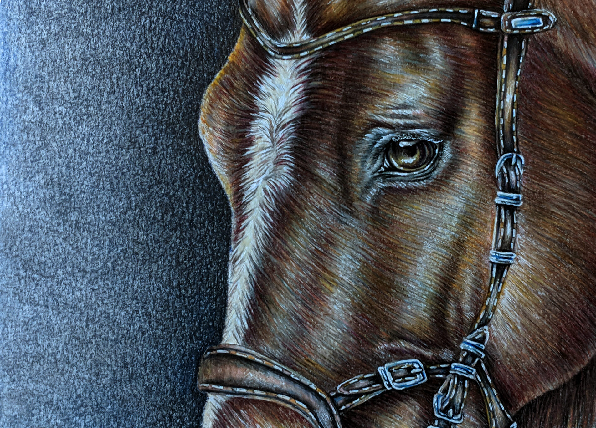 New Horse Drawing Colored Pencil Animal Art Artistry By Lisa Marie